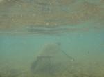 ノースショアアリイビーチ水中の海亀1.JPG