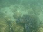 ノースショアラニアケアビーチ海中の海ガメ3.JPG