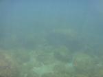 ノースショア海亀ビーチラニアケアの海中3.JPG