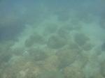 ノースショア海亀ビーチラニアケアの海中4.JPG