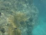 ハナウマ湾海中風景1.JPG