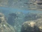 ハナウマ湾海中風景10.JPG