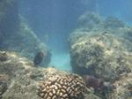ハナウマ湾海中風景12.JPG