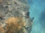 ハナウマ湾海中風景2.JPG