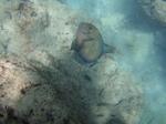 ハナウマ湾海中風景21.JPG