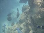ハナウマ湾海中風景25.JPG