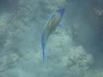 ハナウマ湾海中風景27.JPG