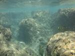 ハナウマ湾海中風景9.JPG