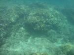 ノースショアスリーテーブルズ海中の珊瑚2.JPG